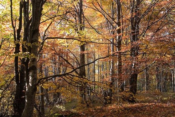 Витоша - гора в пламъци