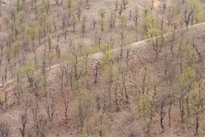Пролет във Влахина (Пролет във Влахина планина)
