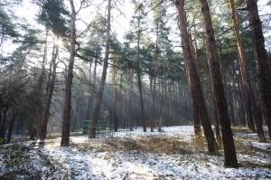 Княжевската гора на път за работа (Ние обичаме културата… и бахура)