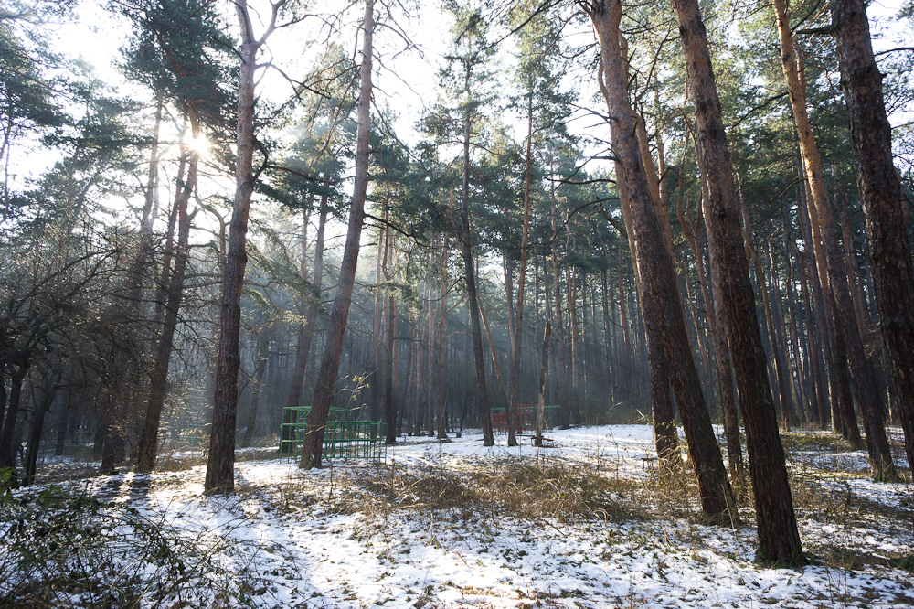 Княжевската гора на път за работа