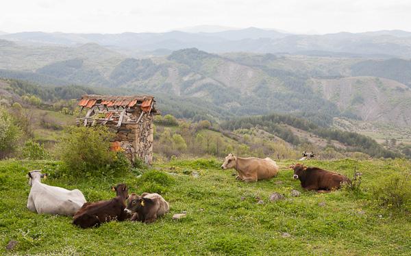 Кравешка почивка