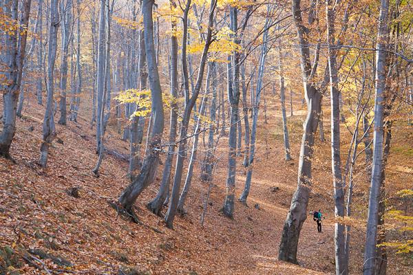 Малки в голямата светеща гора