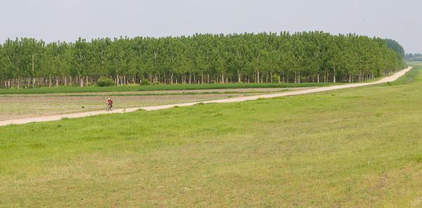 Црвена бициклиста, зелене тополе