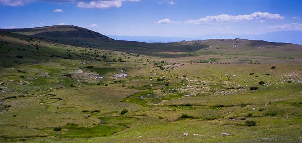 Под връх Ибър - поляни и крави